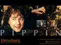 Pippin Took - pippin-took wallpaper