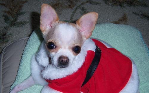 Santa Suit !!