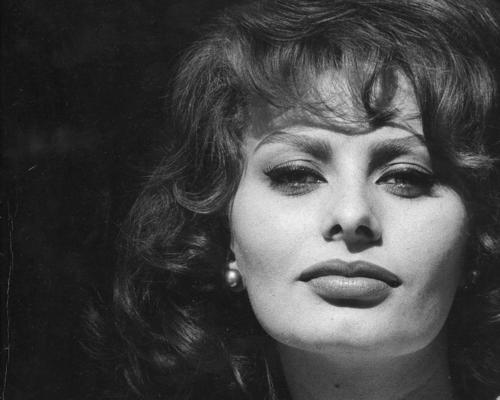 Sophia Loren wallpaper probably with a portrait called Sophia Loren