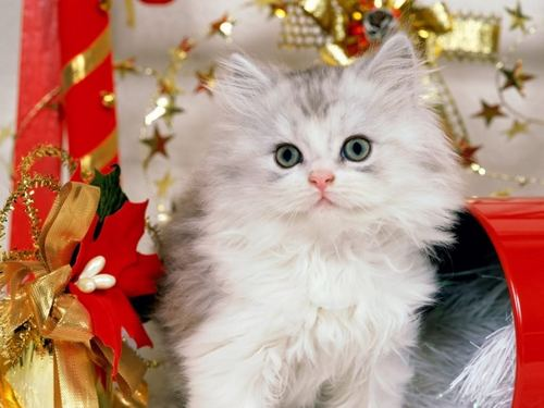 Cats wallpaper entitled Christmas Cat Wallpaper