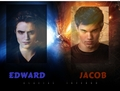 EDWARD vs jacob - twilight-series photo