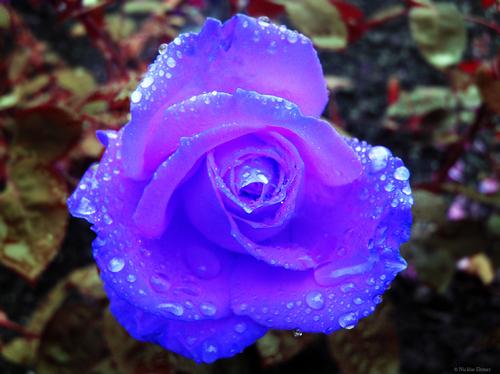 God's creative colors