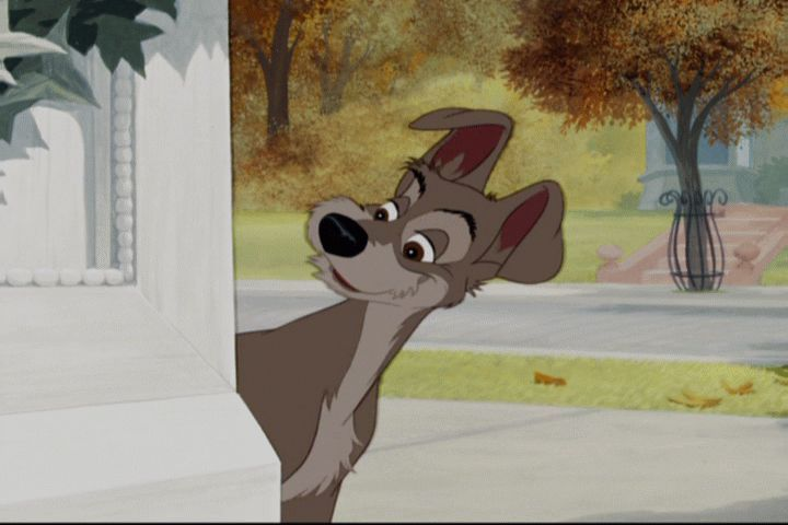 disneys lady and the tramp images lady and the tramp hd