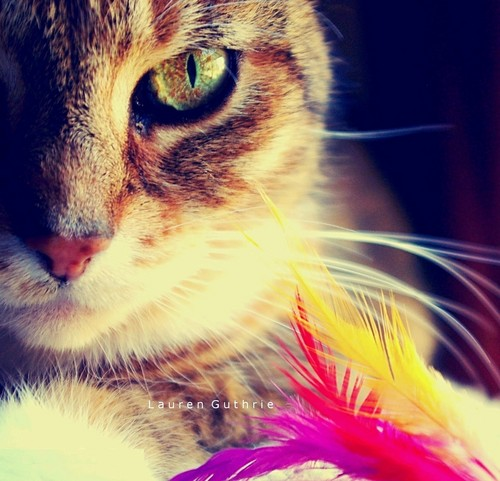 Sammie with feathers
