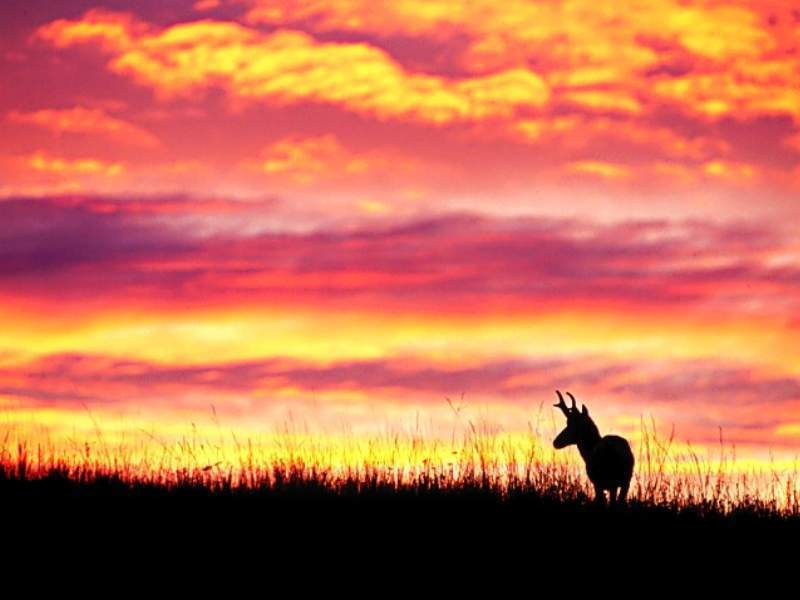 Sunset Wallpapr