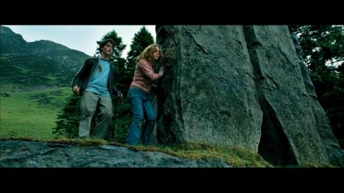 Harry and Hermione wallpaper containing a sitka spruce called The Prisoner of Azkaban