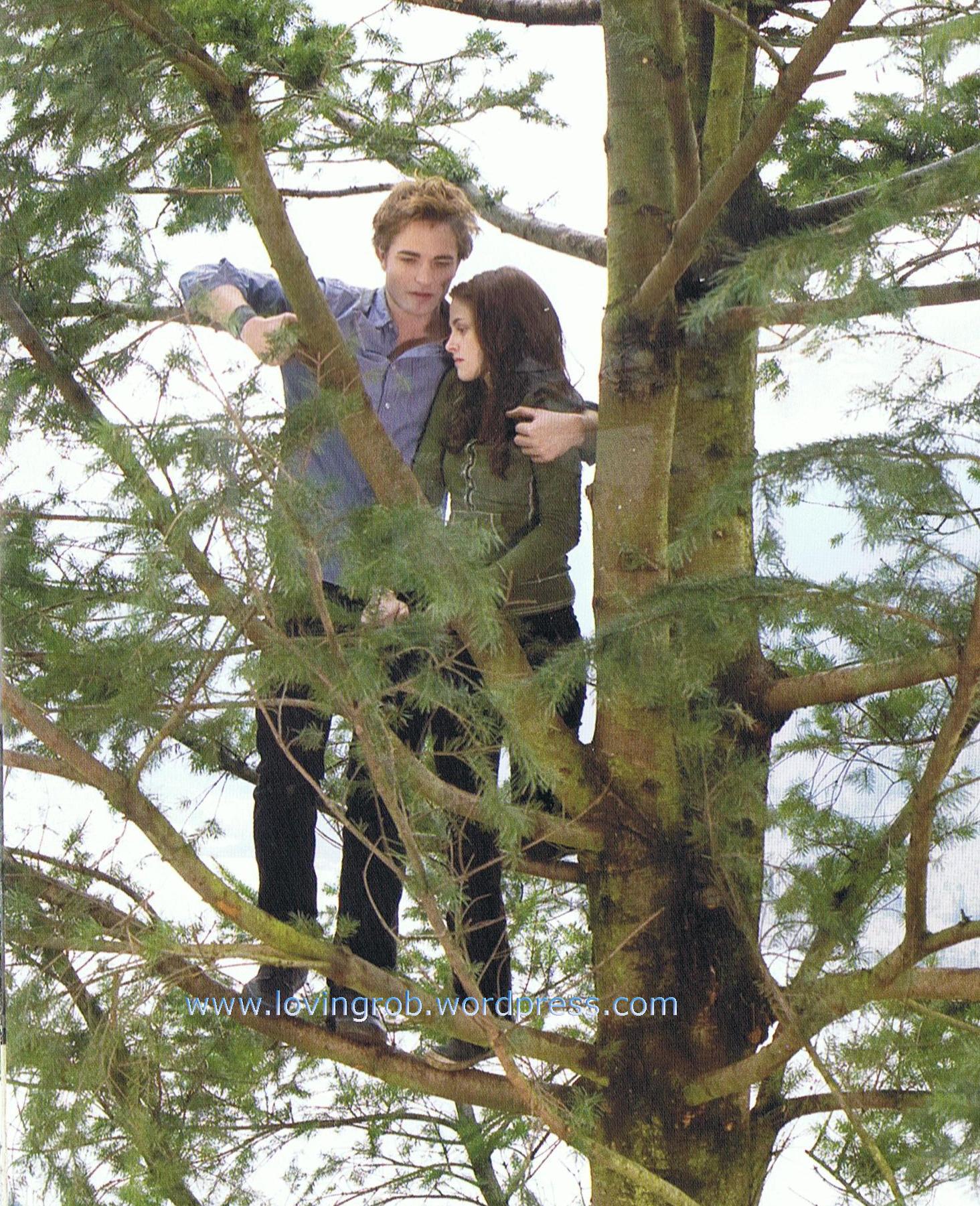 Twilight Pictures