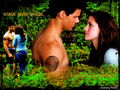 *Jacob & Bella* - jacob-and-bella wallpaper
