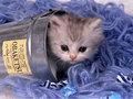 Adorable lil' mèo con