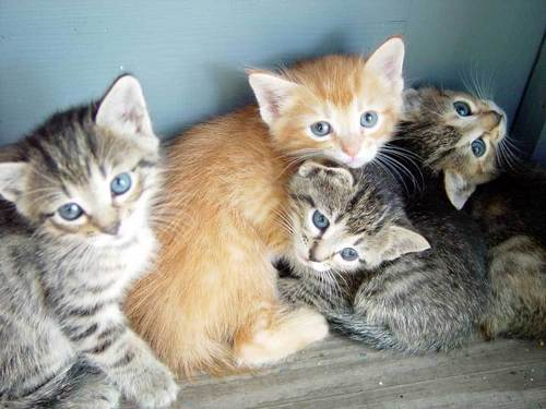 Adorable lil&#39; Kittens - cute-kittens Photo