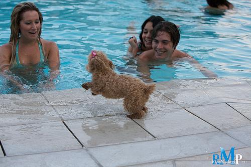 Ashley , Vanessa & Zac