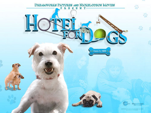 Hotel For cachorros