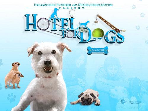Hotel For कुत्ता