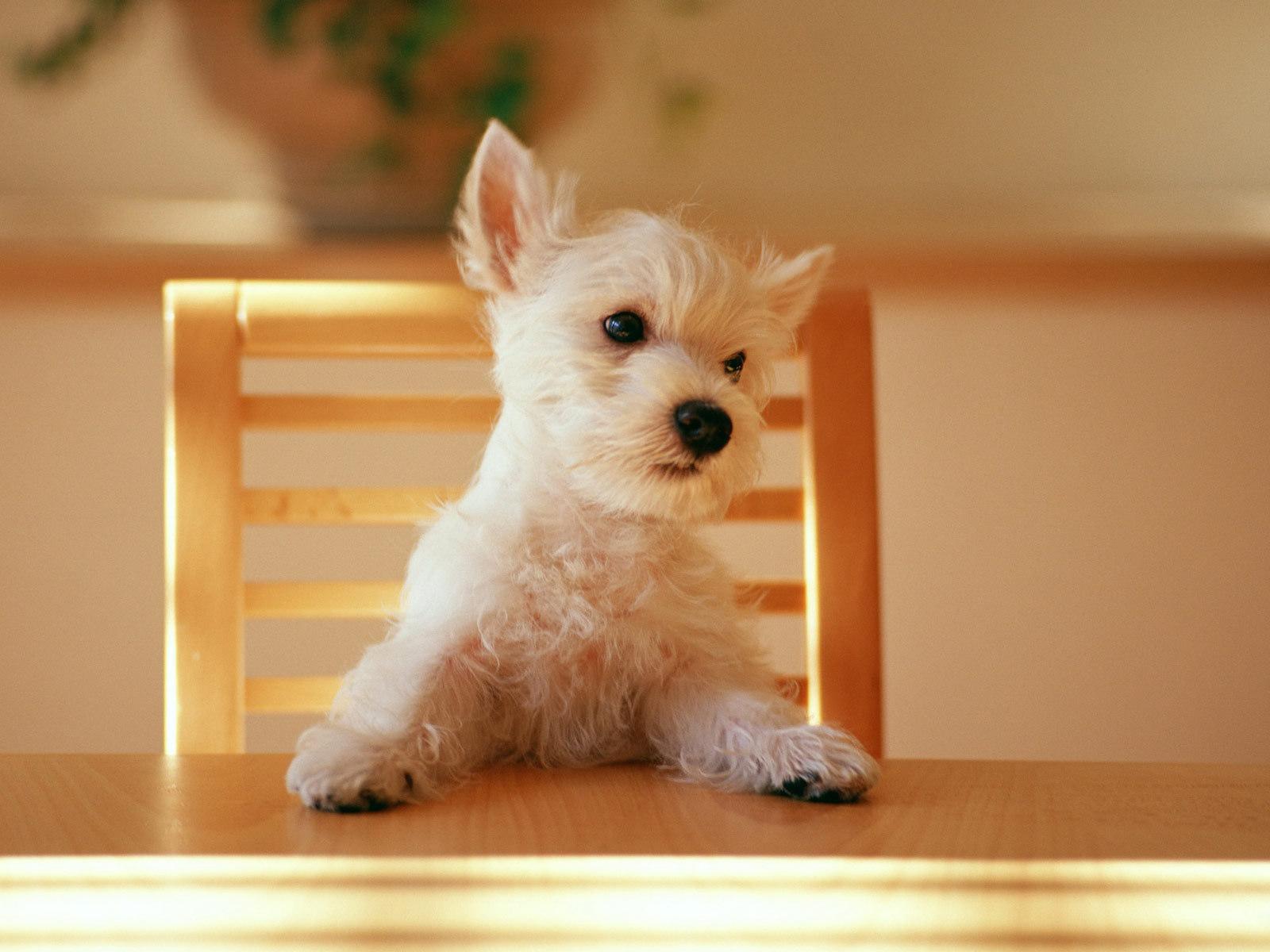 晚餐 Please !!!