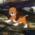 Fox and the Hound - puppies screencap