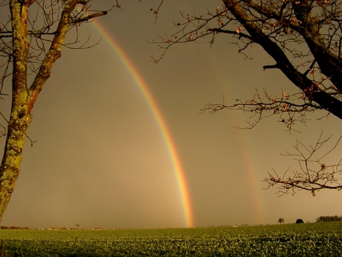 regenbogen Creations