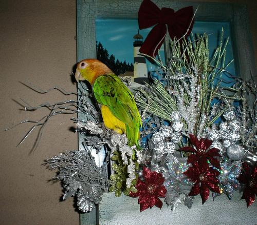 The Christmas Parrot