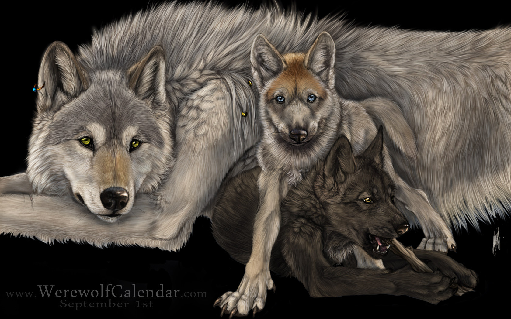 wolves images wolves wallpapers hd wallpaper and