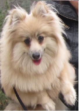 a very fluffy dog :)