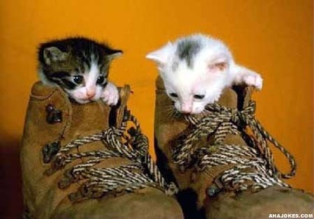boot-kitty