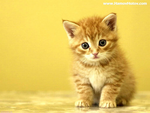 Curious ! - cute-kittens Wallpaper