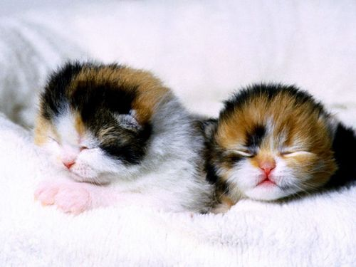 Sleeping - cute-kittens Wallpaper