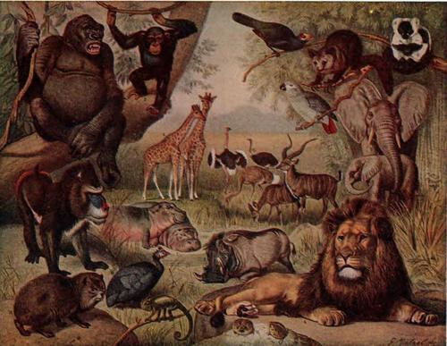 animaux of the World- Africa