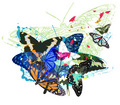 butterfly, kipepeo Art