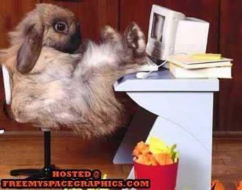 Busy Bunny !