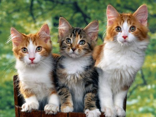 Cute Kittens images Damn cute cats!!!!!!!!!!!!! HD wallpaper and background photos
