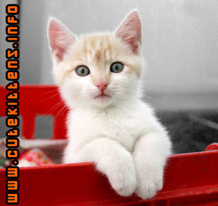Cute kittens images damn cute cats wallpaper and cute kittens images damn cute cats wallpaper and background photos thecheapjerseys Gallery