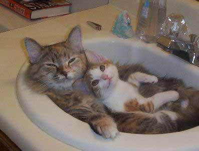 Damn cute cats!!!!!!!!!!!!! - cute-kittens Photo