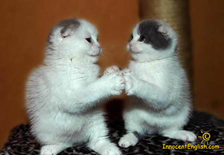 Cute Kittens Images Damn Cute Cats Wallpaper And