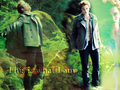Edward Cullen,Twilight - twilight-series photo
