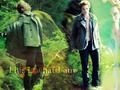 Edward Cullen,Twilight - twilight-series photo