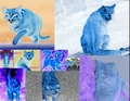 FireStar/RavenEyes collage