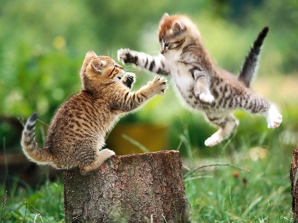Cute Kittens Playful