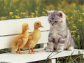 Friends - cute-kittens wallpaper