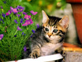 In The Garden - cute-kittens wallpaper