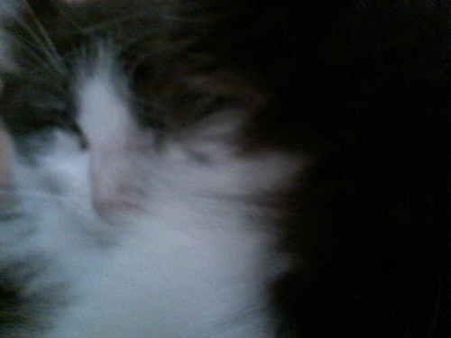 My cat Ever