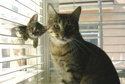 cute Kucing
