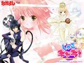 Amu,Ikuto,Tadase - shugo-chara wallpaper