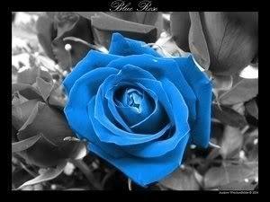 Blue bulaklak