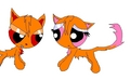 Brick and Blossom kitty love - powerpuff-and-rowdyruff-animals fan art