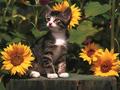 cats - Cat Wallpaper wallpaper