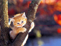 Cat Wallpaper - cats wallpaper