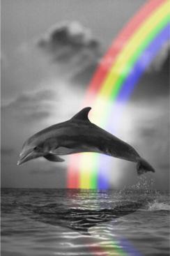 dolfijn Art
