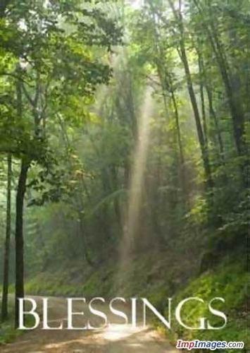 God's beautiful trees