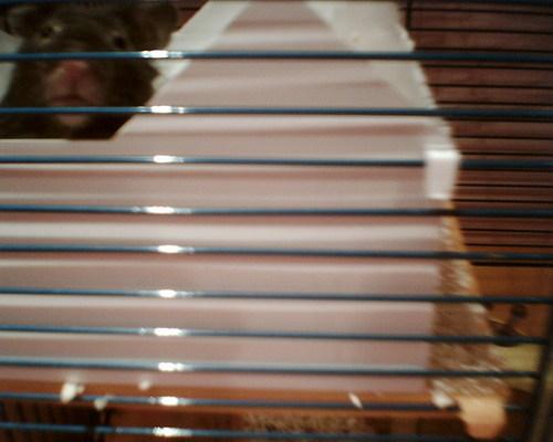 Ma hamster Lil Ed!!!!!! xxx
