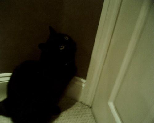 My Cat Milo xxx